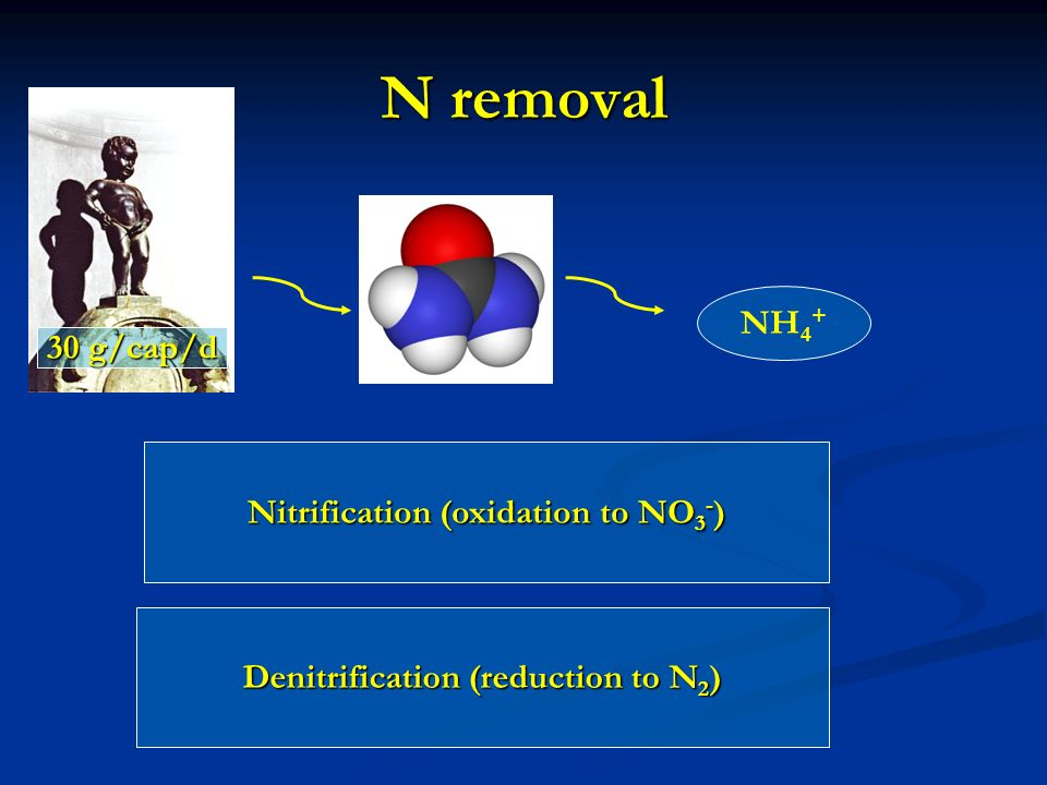 N removal NH 4 + Nitrification (oxidation to NO 3 - ) Denitrification (reduction to N 2 ) 30 g/cap/d