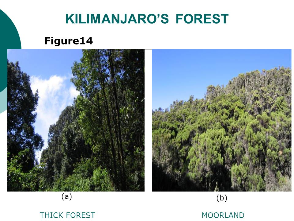 KILIMANJAROS FOREST THICK FORESTMOORLAND Figure14 (a) (b)