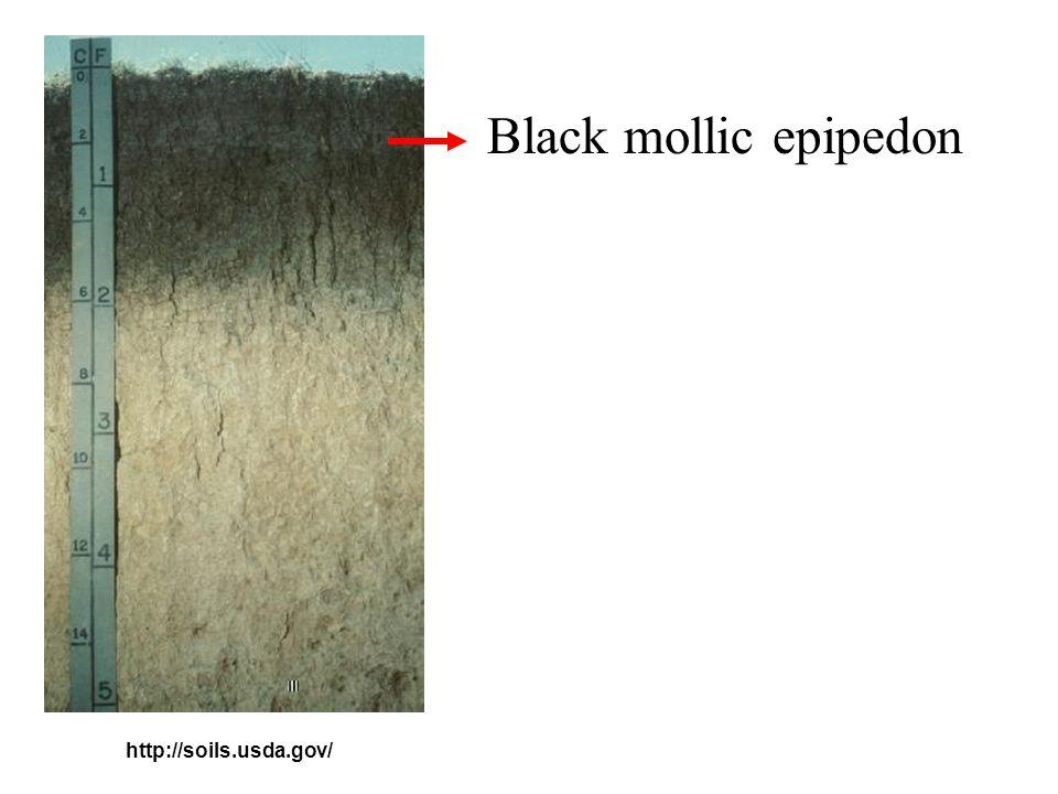 Yermic epipedon http://www.fsagx.ac.be/gp/desert-soil/index4.htm
