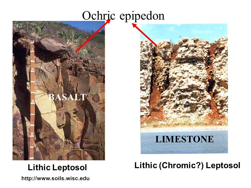 Calcaric Leptosols