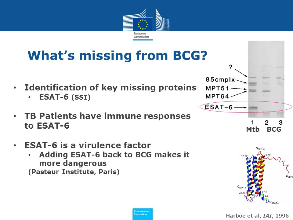 Policy Research and Innovation Research and Innovation Whats missing from BCG? Harboe et al, IAI, 1996 Identification of key missing proteins ESAT-6 (