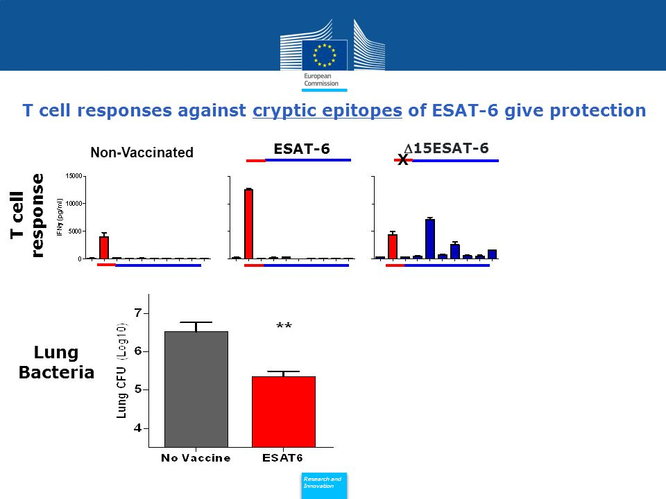 Policy Research and Innovation Research and Innovation T cell responses against cryptic epitopes of ESAT-6 give protection Non-Vaccinated ESAT-6 15ESAT-6 X T cell response Lung Bacteria