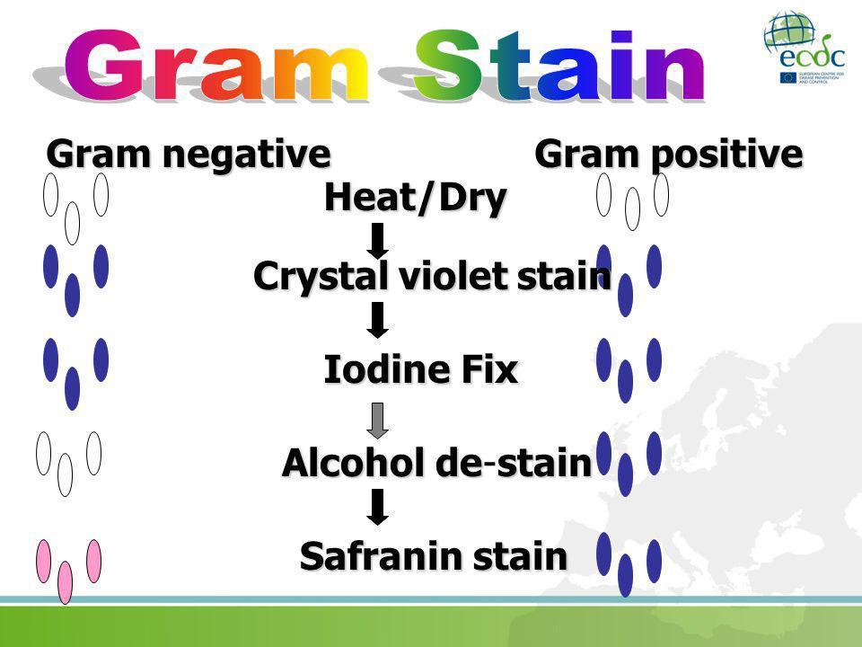 Gram negative Gram positive Heat/Dry Crystal violet stain IodineFix Iodine Fix Safranin stain Alcoholdestain Alcohol de-stain