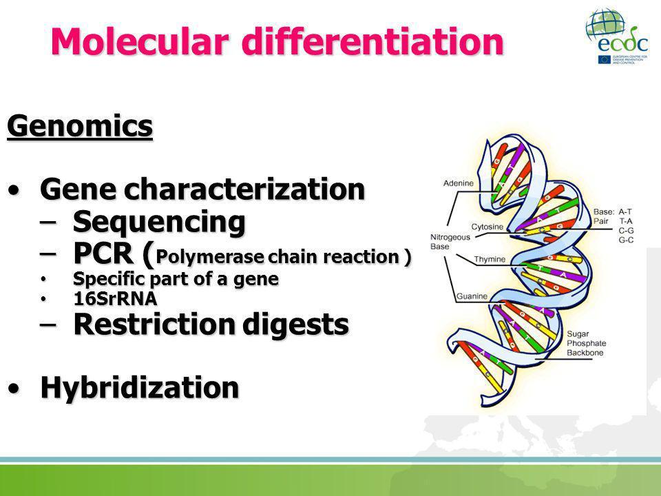 Molecular differentiation Genomics Gene characterizationGene characterization –Sequencing –PCR ( Polymerase chain reaction ) Specific part of a gene S