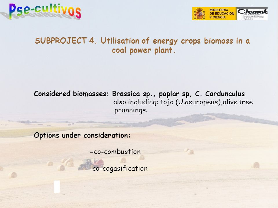 SUBPROJECT 4. Utilisation of energy crops biomass in a coal power plant.