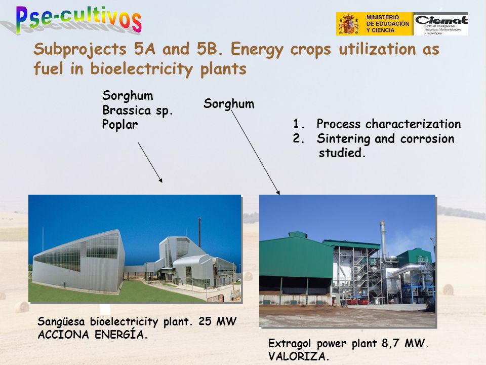 Subprojects 5A and 5B. Energy crops utilization as fuel in bioelectricity plants Sangüesa bioelectricity plant. 25 MW ACCIONA ENERGÍA. Extragol power