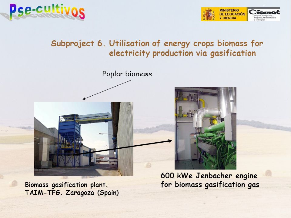 Biomass gasification plant. TAIM-TFG. Zaragoza (Spain) Poplar biomass Subproject 6. Utilisation of energy crops biomass for electricity production via