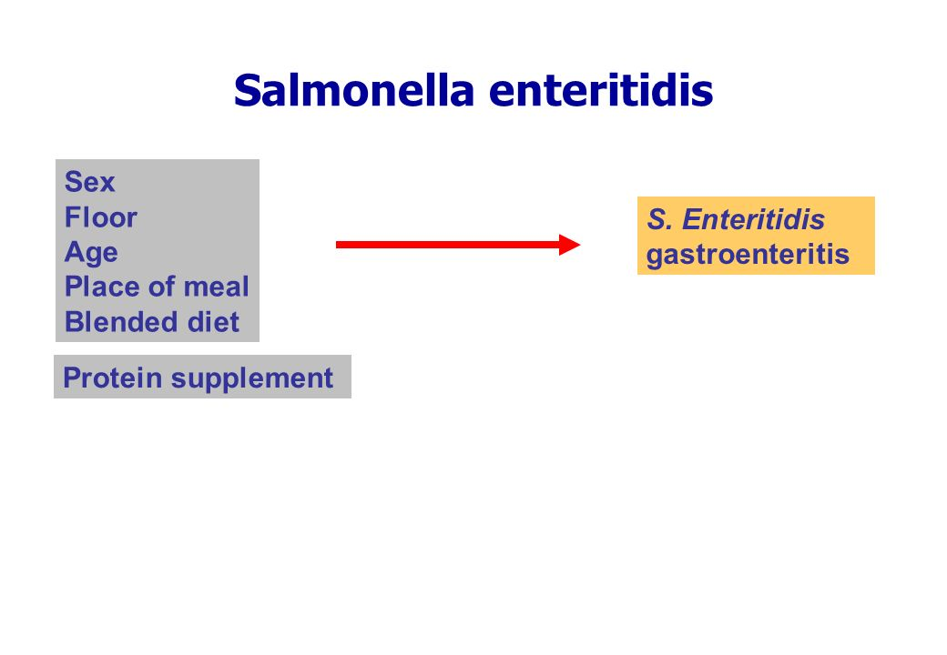 Salmonella enteritidis Protein supplement S.