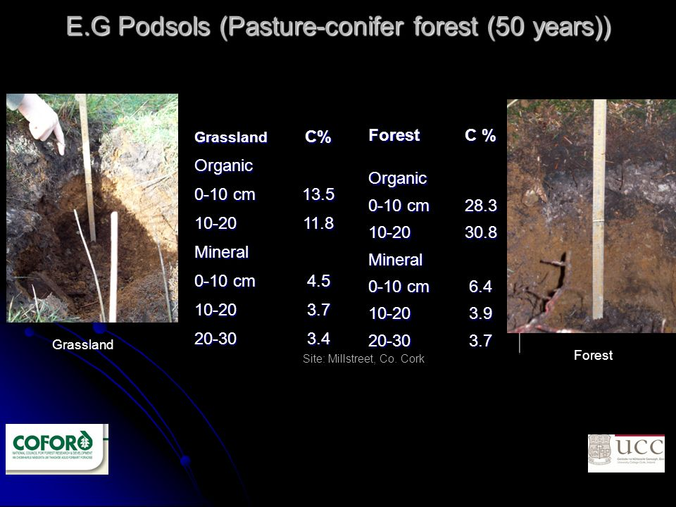 E.G Podsols (Pasture-conifer forest (50 years)) Forest C % Organic 0-10 cm 28.3 10-2030.8 Mineral 6.4 10-203.9 20-303.7GrasslandC%Organic 13.5 10-2011