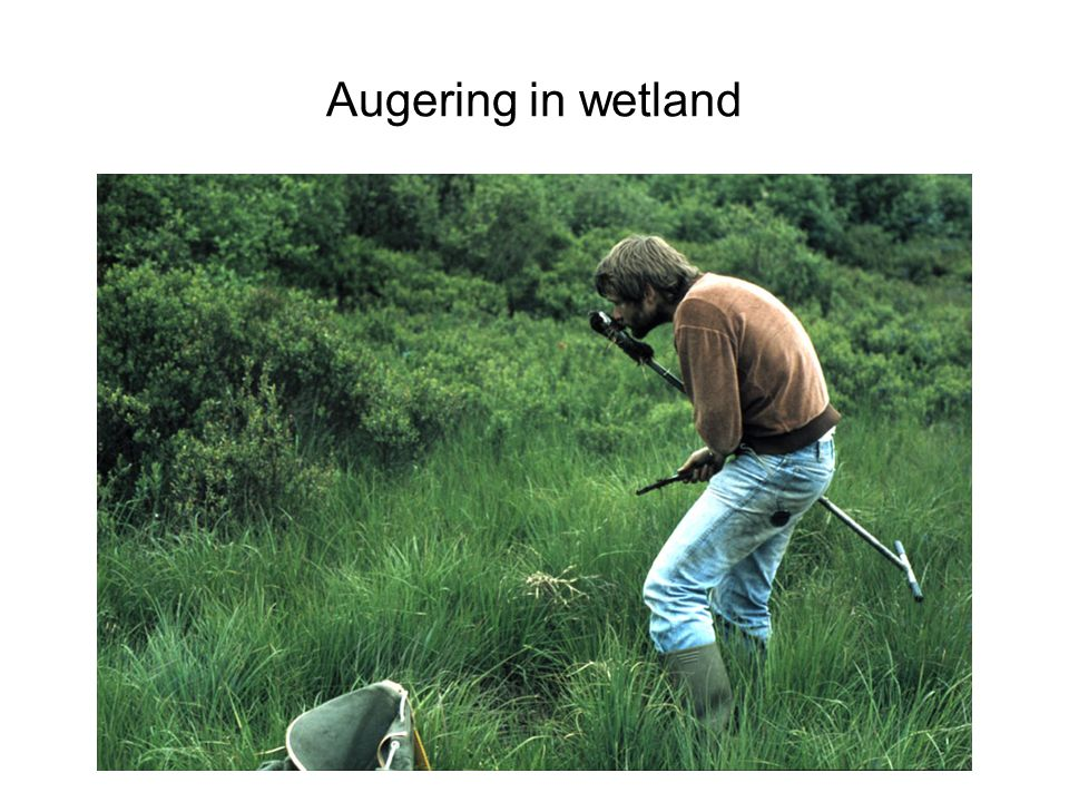 Augering in wetland