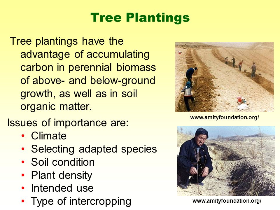 Tree plantings have the advantage of accumulating carbon in perennial biomass of above- and below-ground growth, as well as in soil organic matter.