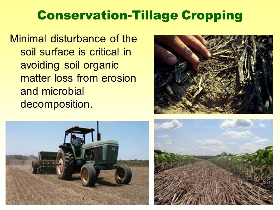 Minimal disturbance of the soil surface is critical in avoiding soil organic matter loss from erosion and microbial decomposition.