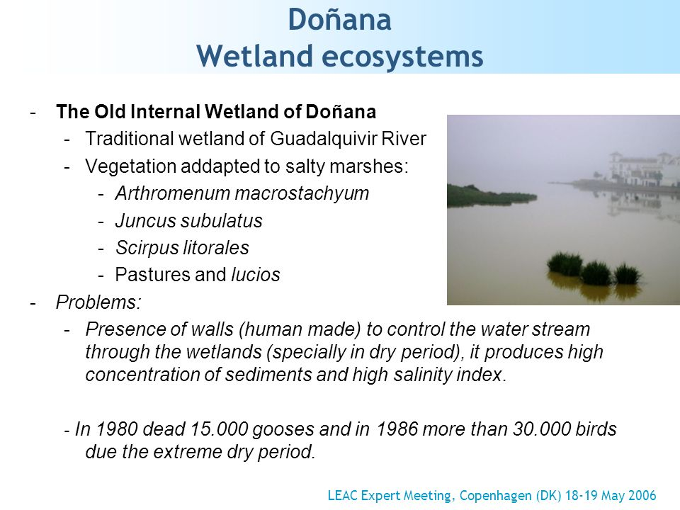 Doñana Wetland ecosystems -The Old Internal Wetland of Doñana -Traditional wetland of Guadalquivir River -Vegetation addapted to salty marshes: -Arthromenum macrostachyum -Juncus subulatus -Scirpus litorales -Pastures and lucios -Problems: -Presence of walls (human made) to control the water stream through the wetlands (specially in dry period), it produces high concentration of sediments and high salinity index.