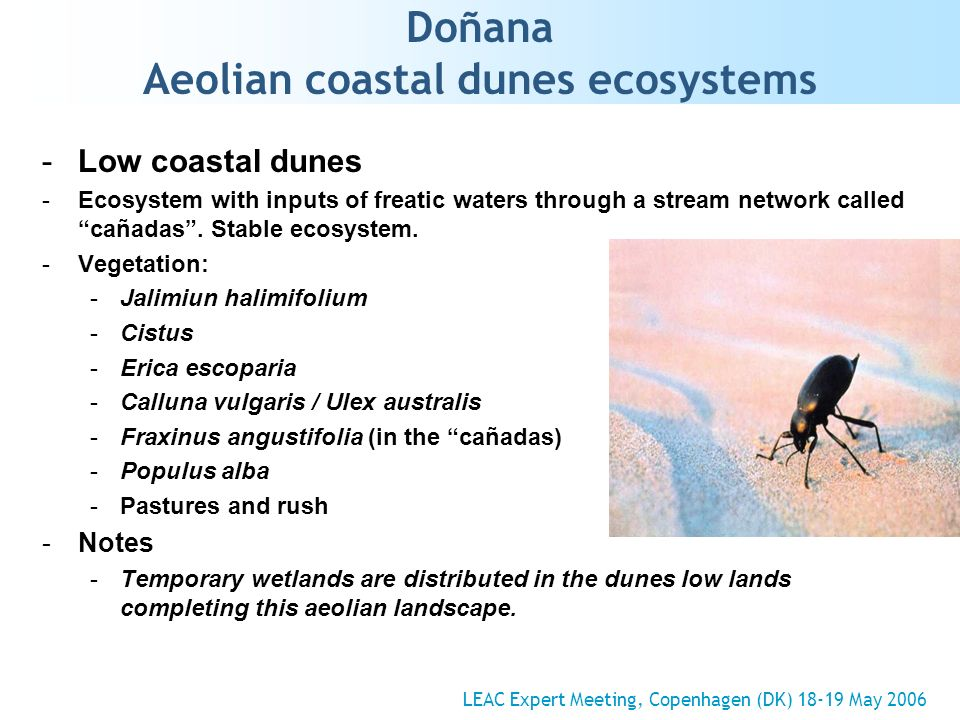 Doñana Aeolian coastal dunes ecosystems -Low coastal dunes -Ecosystem with inputs of freatic waters through a stream network called cañadas.