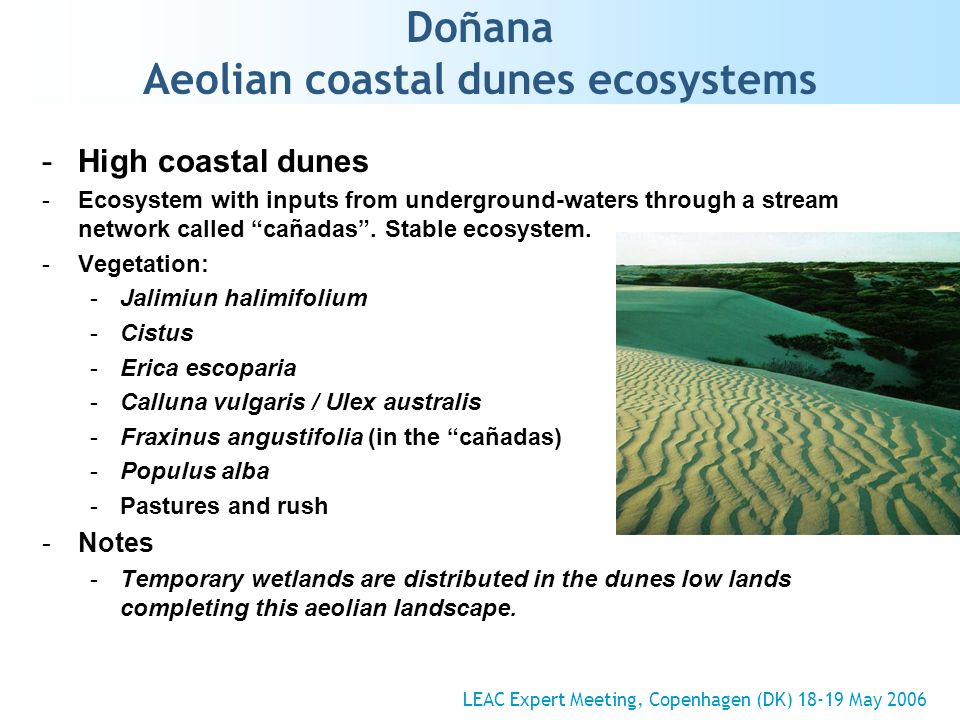 Doñana Aeolian coastal dunes ecosystems -High coastal dunes -Ecosystem with inputs from underground-waters through a stream network called cañadas.