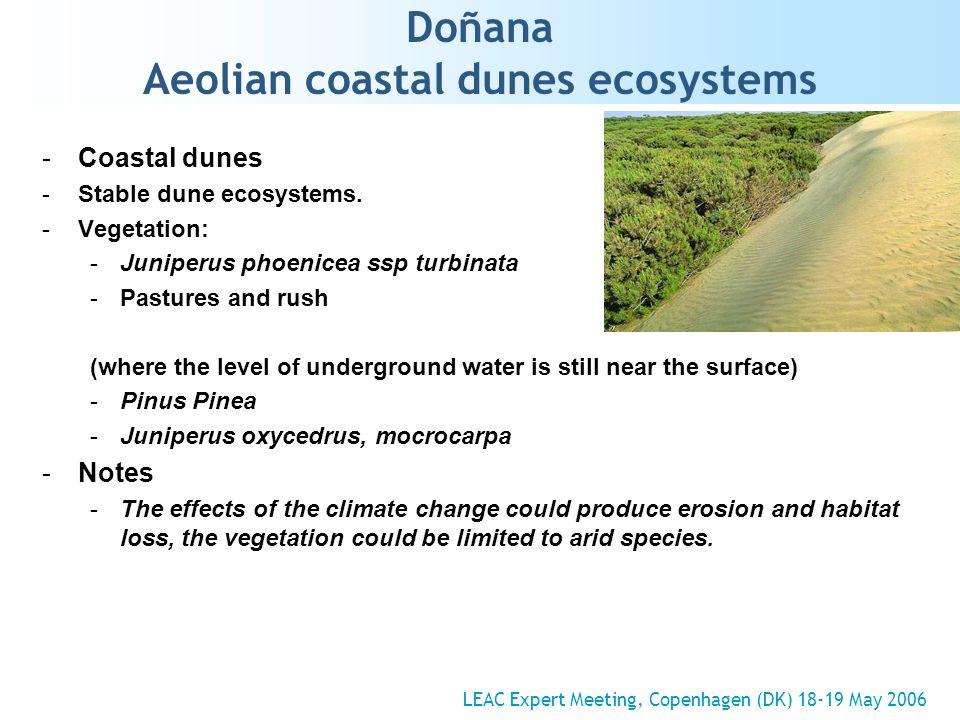 Doñana Aeolian coastal dunes ecosystems -Coastal dunes -Stable dune ecosystems.