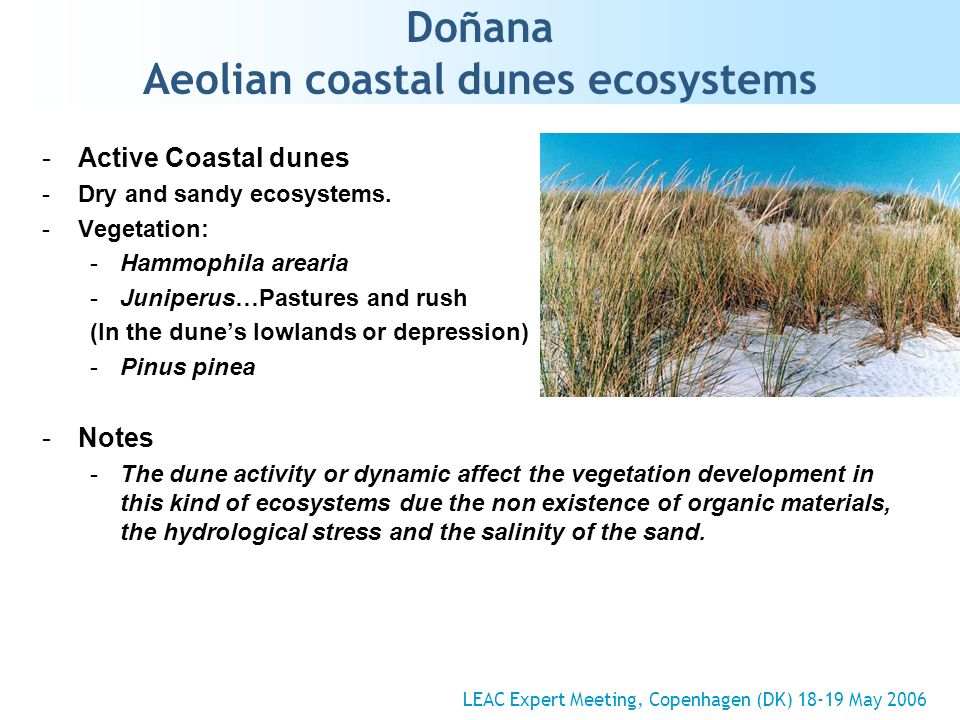 Doñana Aeolian coastal dunes ecosystems -Active Coastal dunes -Dry and sandy ecosystems. -Vegetation: -Hammophila arearia -Juniperus…Pastures and rush