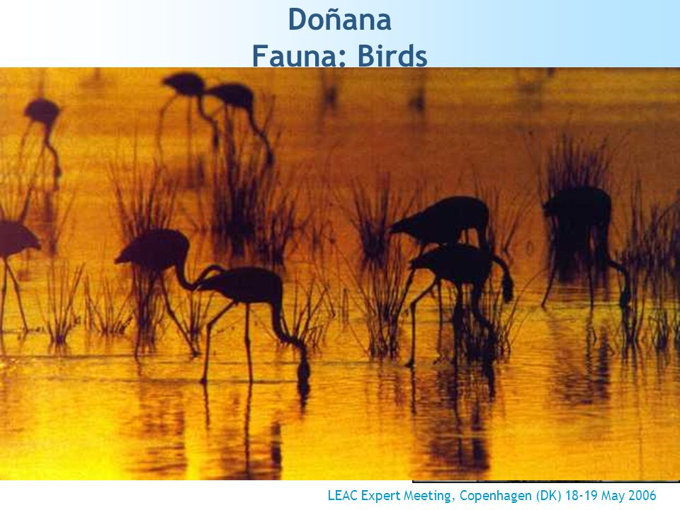 Doñana Fauna: Birds LEAC Expert Meeting, Copenhagen (DK) 18-19 May 2006