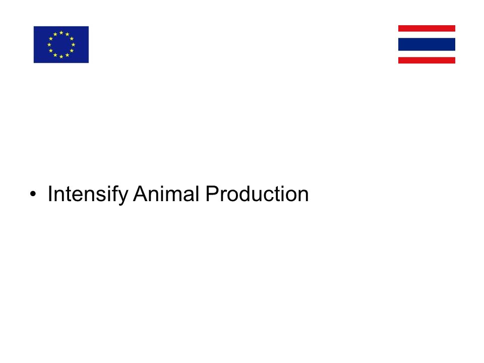 Intensify Animal Production