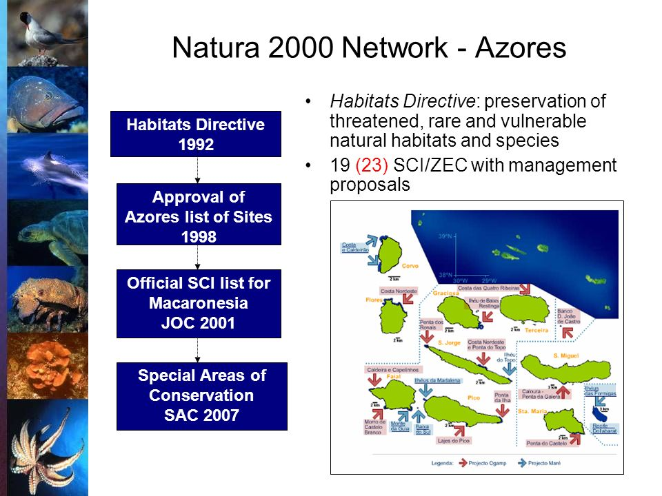 Habitats Directive 1992 Approval of Azores list of Sites 1998 Official SCI list for Macaronesia JOC 2001 Special Areas of Conservation SAC 2007 Habitats Directive: preservation of threatened, rare and vulnerable natural habitats and species 19 (23) SCI/ZEC with management proposals Natura 2000 Network - Azores