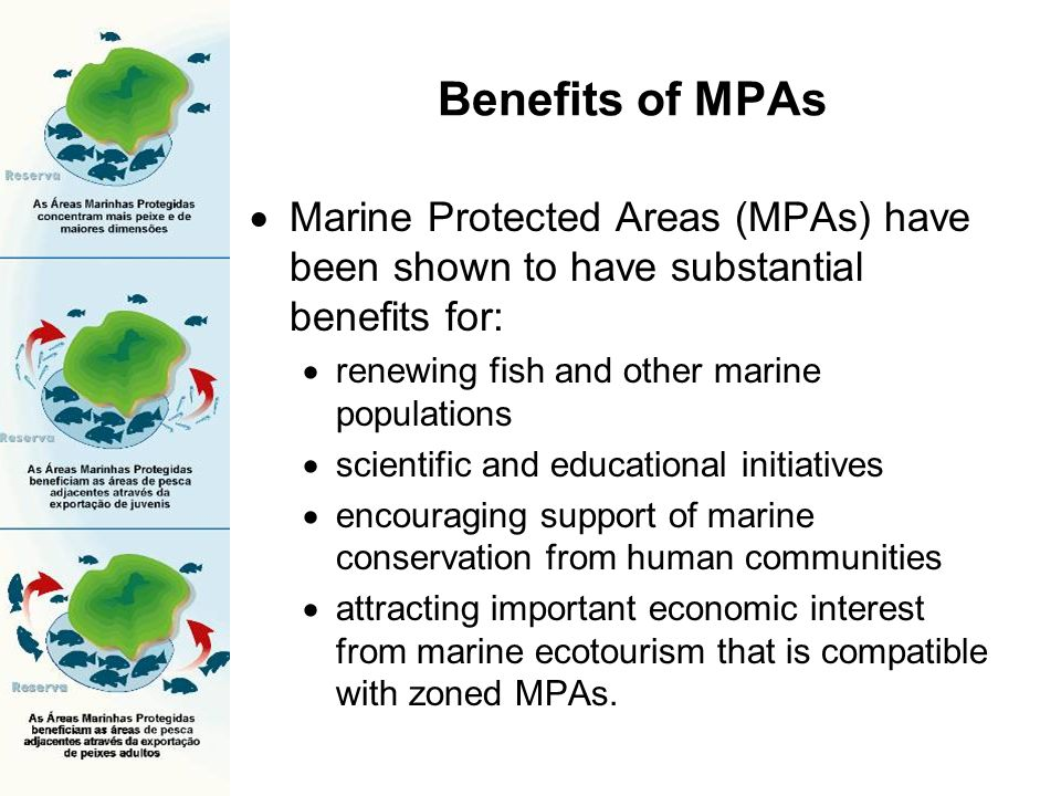 Benefits of MPAs Marine Protected Areas (MPAs) have been shown to have substantial benefits for: renewing fish and other marine populations scientific