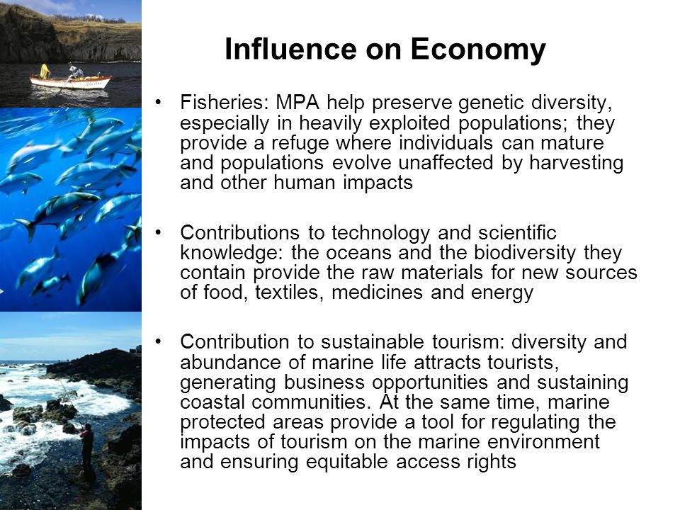 Influence on Economy Fisheries: MPA help preserve genetic diversity, especially in heavily exploited populations; they provide a refuge where individu