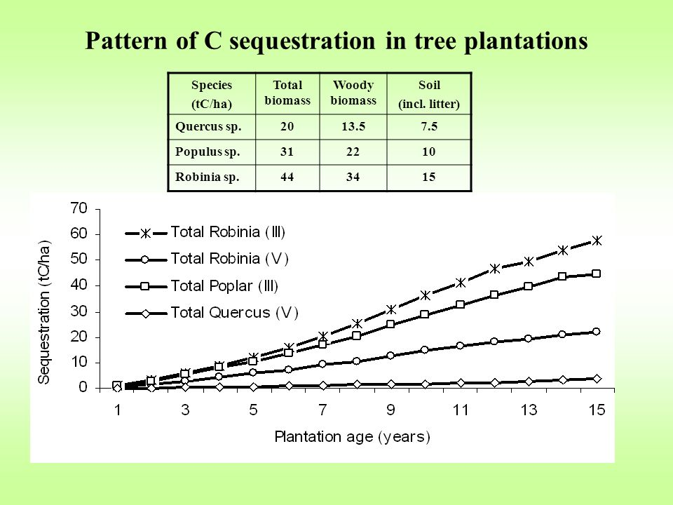 Pattern of C sequestration in tree plantations Species (tC/ha) Total biomass Woody biomass Soil (incl.