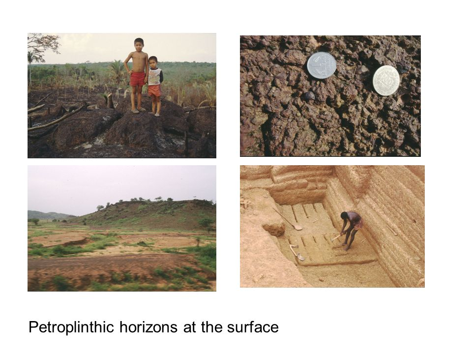 Petroplinthic horizons at the surface