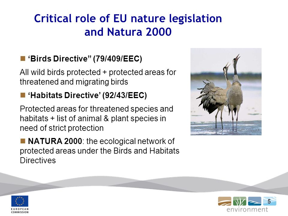 5 Critical role of EU nature legislation and Natura 2000 Birds Directive (79/409/EEC) All wild birds protected + protected areas for threatened and migrating birds Habitats Directive (92/43/EEC) Protected areas for threatened species and habitats + list of animal & plant species in need of strict protection NATURA 2000: the ecological network of protected areas under the Birds and Habitats Directives
