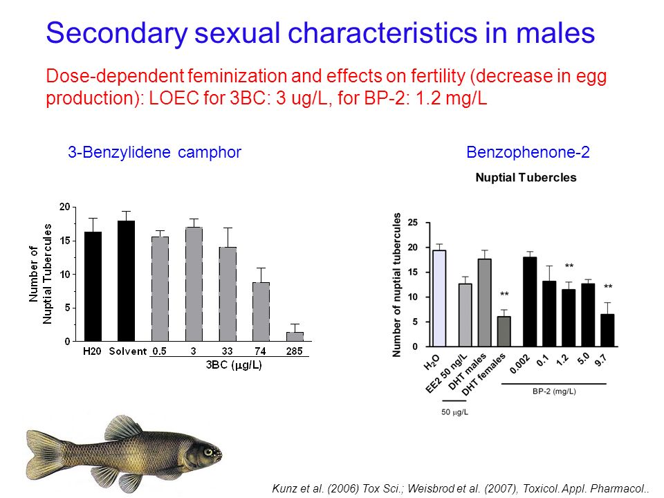 Secondary sexual characteristics in males Dose-dependent feminization and effects on fertility (decrease in egg production): LOEC for 3BC: 3 ug/L, for