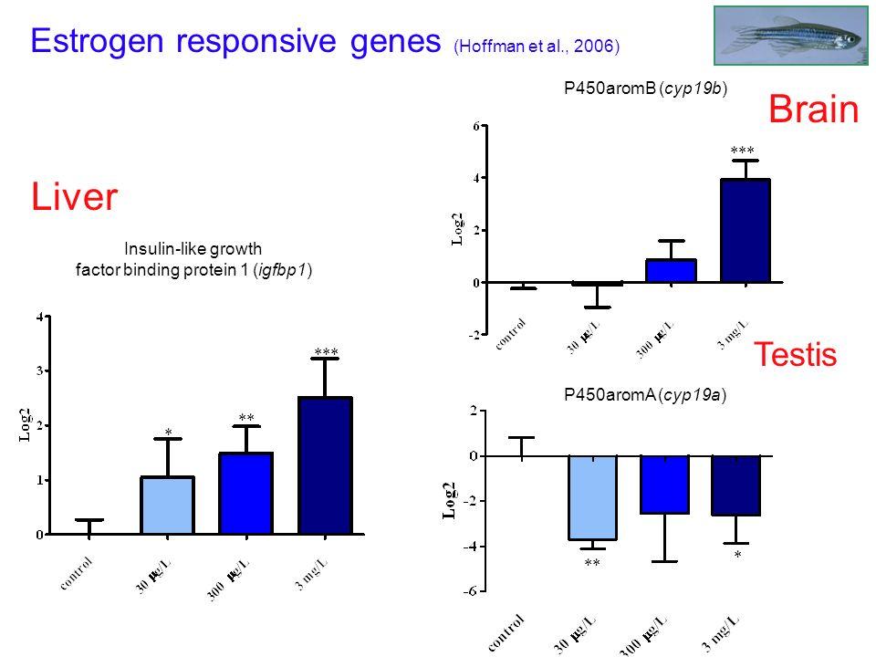 Liver Insulin-like growth factor binding protein 1 (igfbp1) Estrogen responsive genes (Hoffman et al., 2006) *** ** * *** P450aromB (cyp19b) Brain **