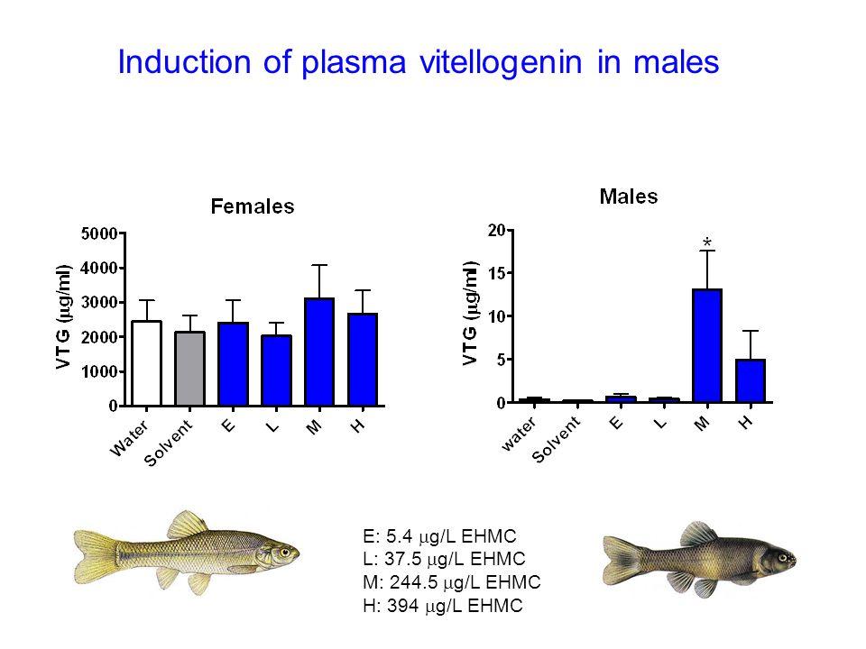 Induction of plasma vitellogenin in males E: 5.4 g/L EHMC L: 37.5 g/L EHMC M: 244.5 g/L EHMC H: 394 g/L EHMC