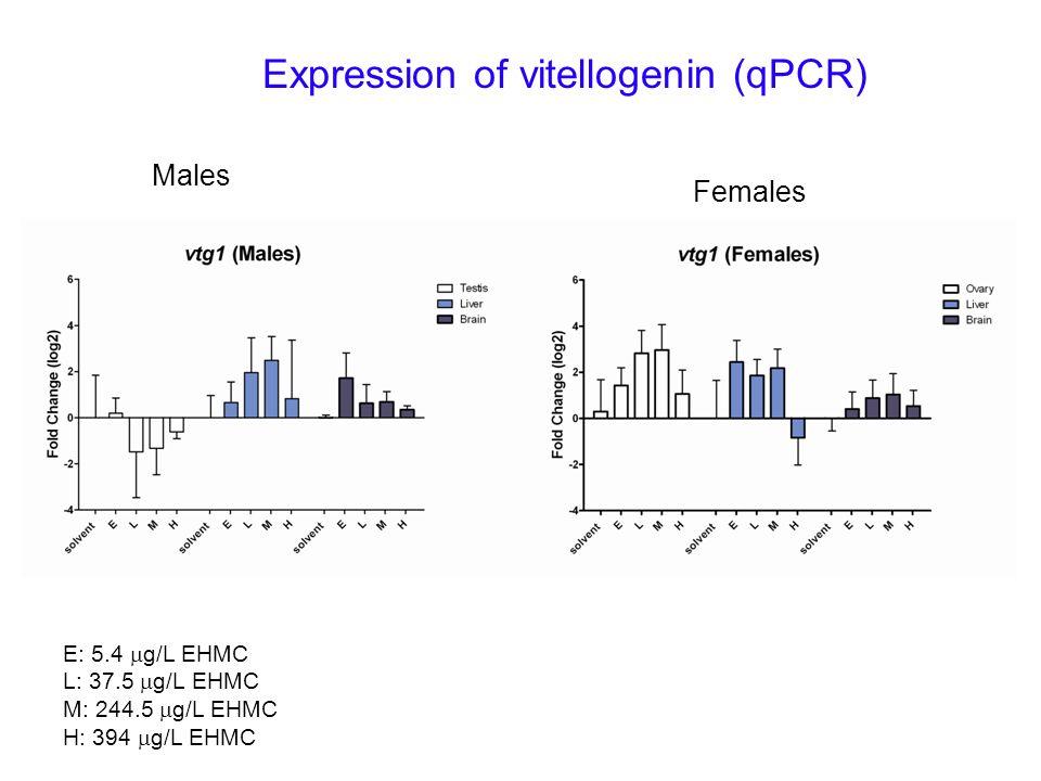 Expression of vitellogenin (qPCR) Males Females E: 5.4 g/L EHMC L: 37.5 g/L EHMC M: 244.5 g/L EHMC H: 394 g/L EHMC