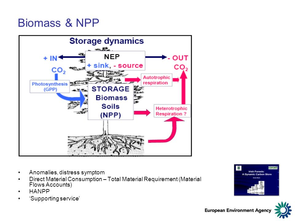 Biomass & NPP Anomalies, distress symptom Direct Material Consumption – Total Material Requirement (Material Flows Accounts) HANPP Supporting service