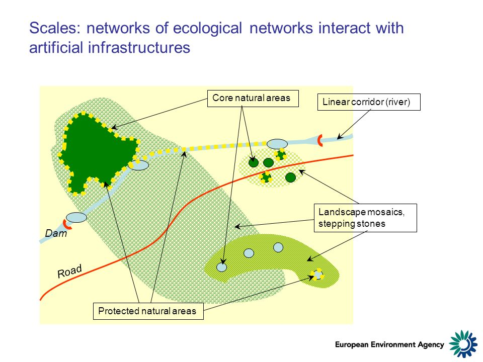Scales: networks of ecological networks interact with artificial infrastructures Core natural areas Protected natural areas Landscape mosaics, stepping stones Linear corridor (river) Road Dam