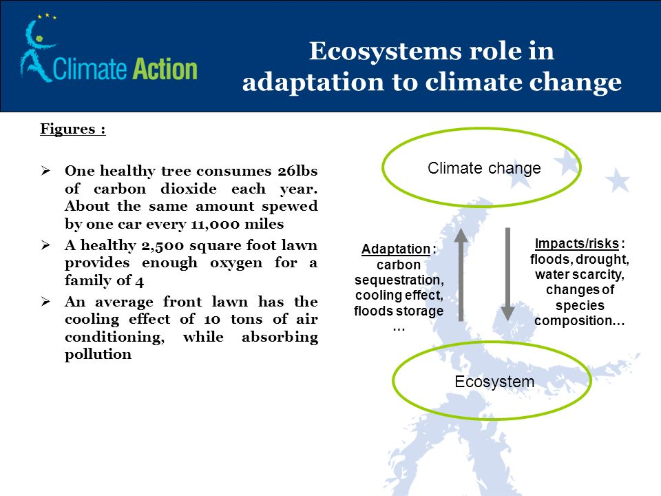 Ecosystems role in adaptation to climate change Figures : One healthy tree consumes 26lbs of carbon dioxide each year. About the same amount spewed by