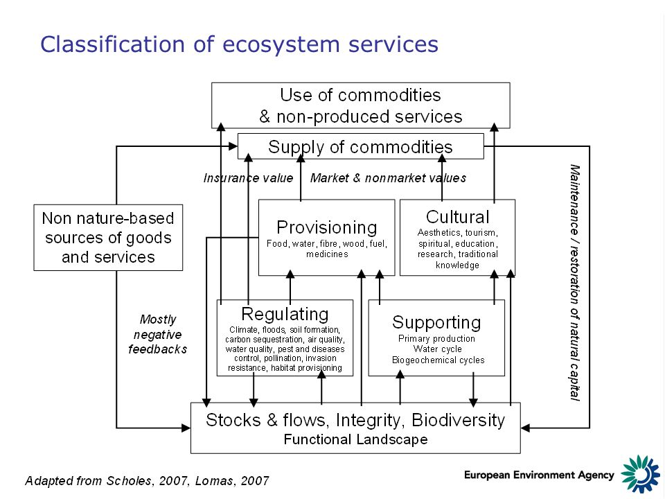 3 rd UNCEEA Meeting New York 26-27 June 2008 Ecosystem services valuation Accounting for ecosystem services value & sustainability Distance to stated targets & additional maintenance/restoration costs Capital stocks and functions Services Market values Physical measurement and shadow prices