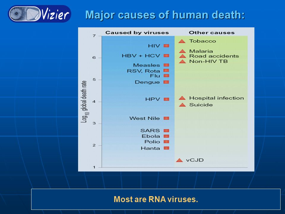Major causes of human death: Major causes of human death: Most are RNA viruses.