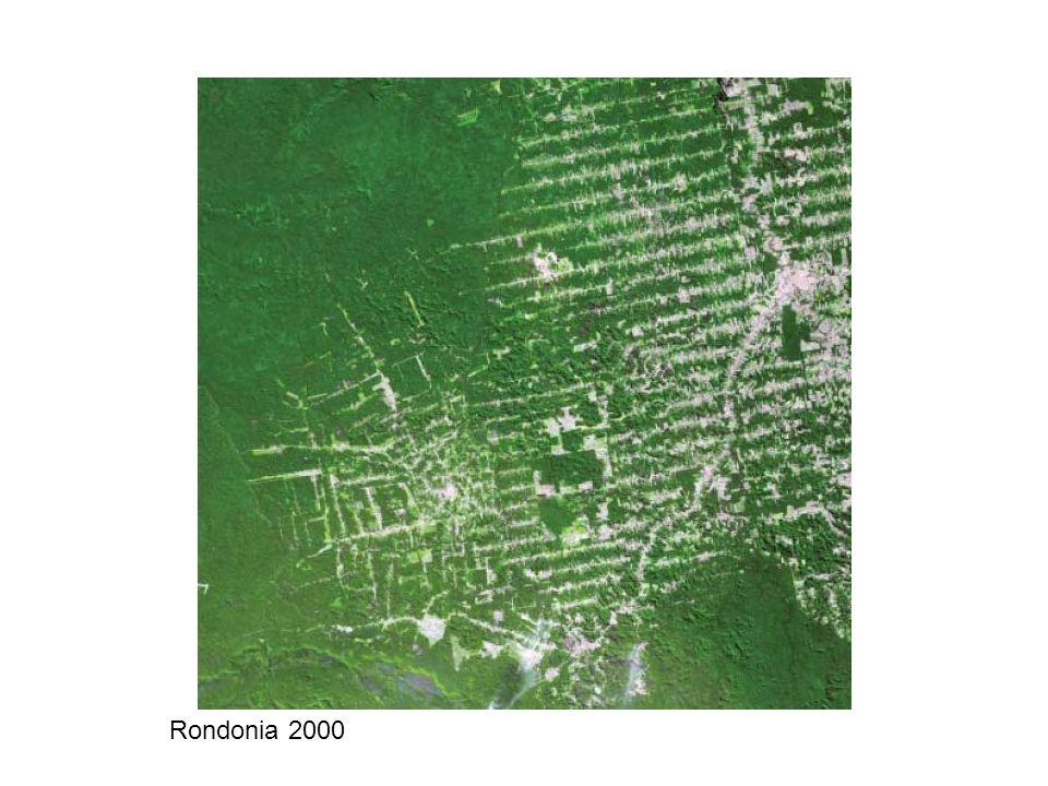 Rondonia 2000