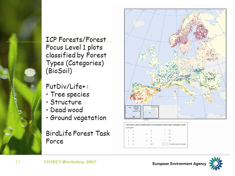 EIONET Workshop 200717 101 SFC 23 October 2007 ICP Forests/Forest Focus Level 1 plots classified by Forest Types (Categories) (BioSoil) FutDiv/Life+ : Tree species Structure Dead wood Ground vegetation BirdLife Forest Task Force