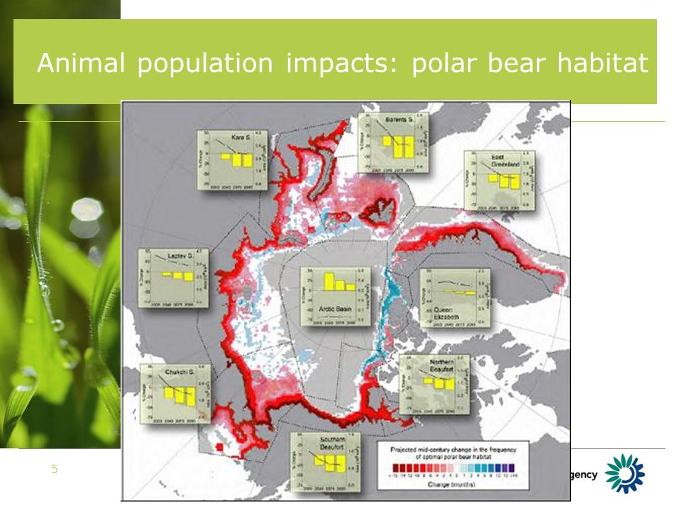 EIONET Workshop 20075 Animal population impacts: polar bear habitat