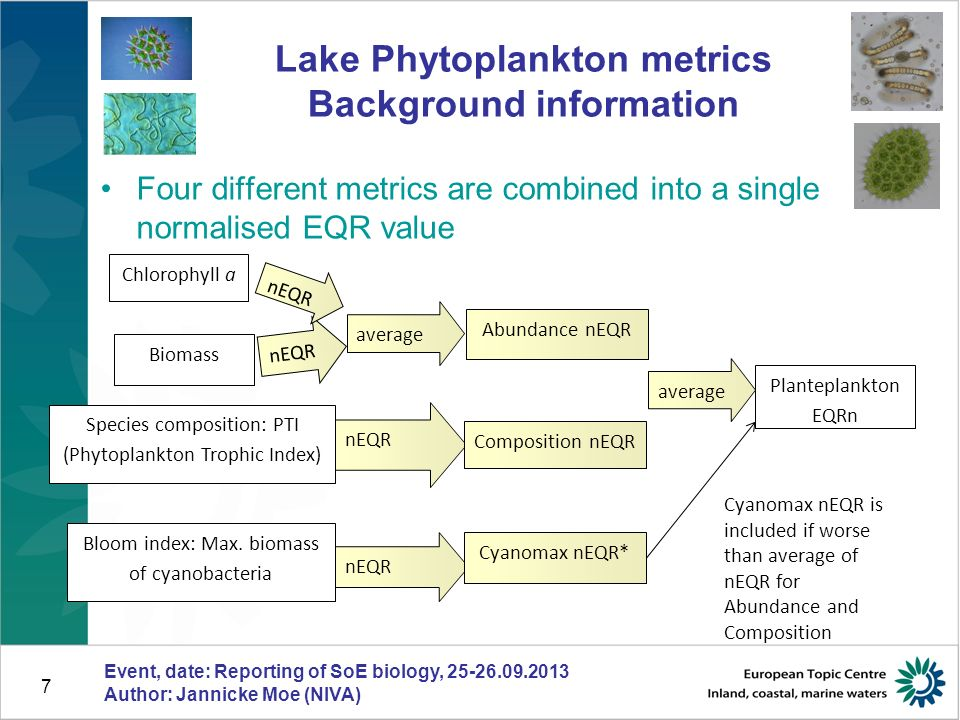7 Four different metrics are combined into a single normalised EQR value Lake Phytoplankton metrics Background information Event, date: Reporting of SoE biology, 25-26.09.2013 Author: Jannicke Moe (NIVA) Biomass Chlorophyll a Planteplankton EQRn nEQR average nEQR Abundance nEQR nEQR Composition nEQR Cyanomax nEQR* average Species composition: PTI (Phytoplankton Trophic Index) Bloom index: Max.