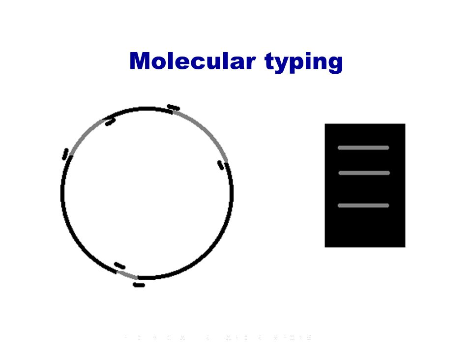 Molecular typing Cutting locations Gel-Electrophoresis Size of fragments