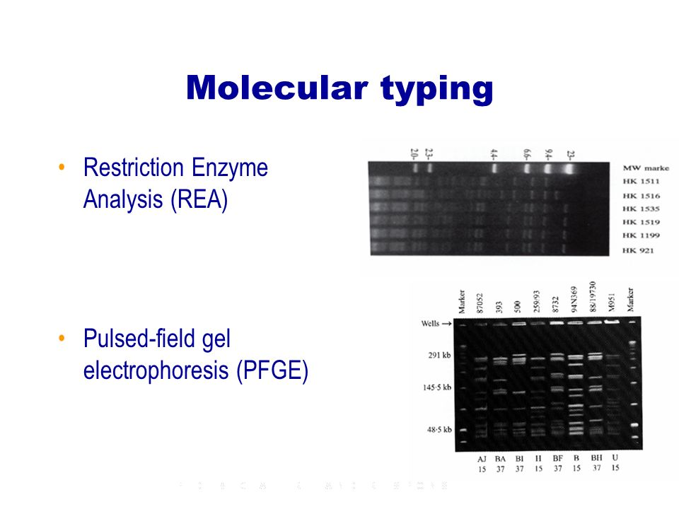 Molecular typing Restriction Enzyme Analysis (REA) Pulsed-field gel electrophoresis (PFGE)