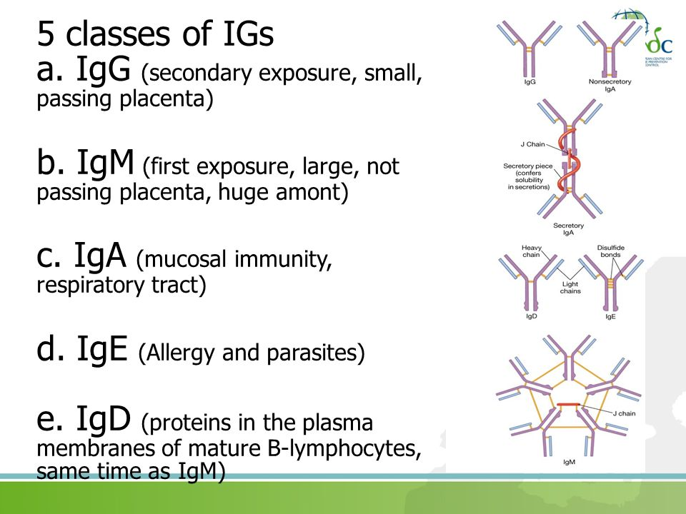 5 classes of IGs a. IgG (secondary exposure, small, passing placenta) b. IgM (first exposure, large, not passing placenta, huge amont) c. IgA (mucosal