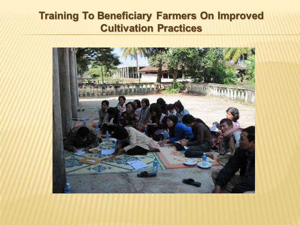 Training To Beneficiary Farmers On Improved Cultivation Practices