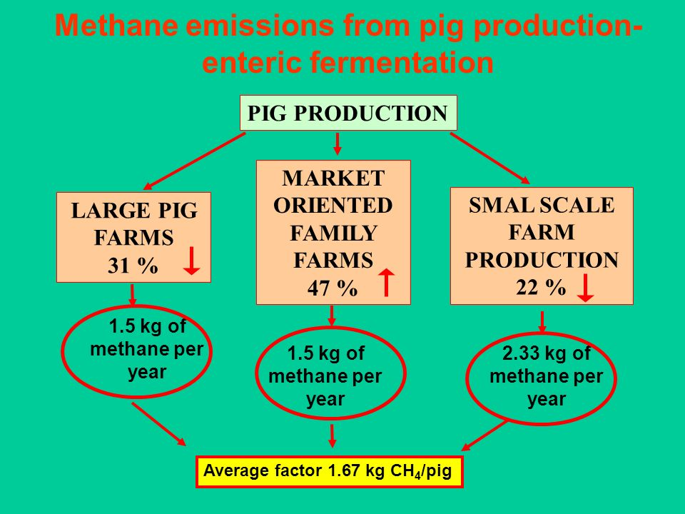 Methane emissions from pig production- enteric fermentation PIG PRODUCTION LARGE PIG FARMS 31 % MARKET ORIENTED FAMILY FARMS 47 % SMAL SCALE FARM PROD