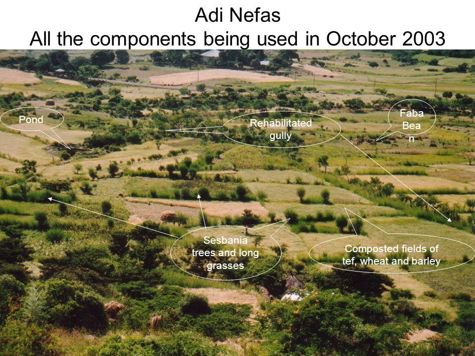 Zeban Sas grazing area in 1996 – starting the rehabilitation work Zeban Sas grazing area in October 2003