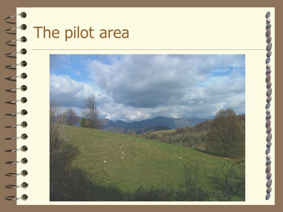 The pilot area