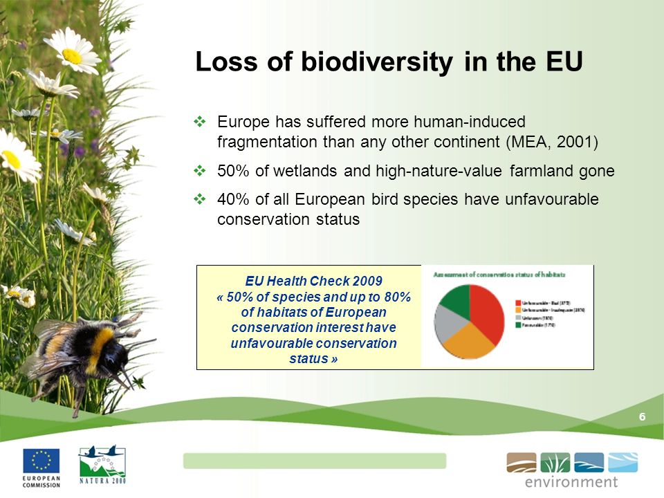 6 Loss of biodiversity in the EU Europe has suffered more human-induced fragmentation than any other continent (MEA, 2001) 50% of wetlands and high-na